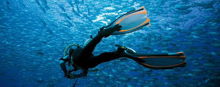 VIAGGI E CROCIERE SUBMar Rosso, Caraibi, Maldive, Micronesia …